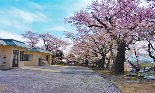 桜に囲まれたショートステイあずま